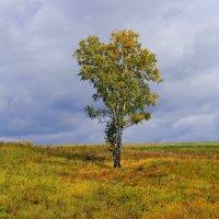 В  гордом  одиночестве. :: Vlad Borschev