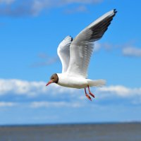 полёт над финским заливом :: Алексей Кошелев