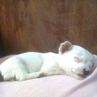 Сладкий сон... :: Натали Жоля