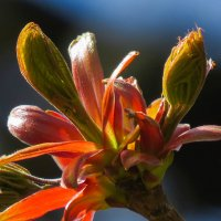 Разноцветная весна :: Наталья Лакомова