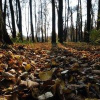 Осень :: Виктор Изотов