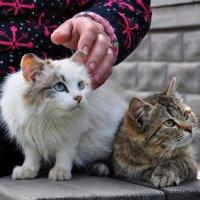 ...сельские коты... :: Ольга Нарышкова