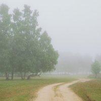 Туман,туман... :: Наталья Покацкая