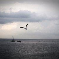 холодное море :: валентин яблонский