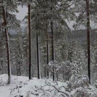 zima :: Valerija Bilotiene