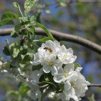 цветы :: Andrei Graur