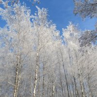 Зима в Пущино 2014 :: Елена Китанина