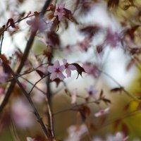 Долгожданная весна :: Алексей Соминский