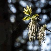 Тверь,весна,обновление!!!!!!!! :: Михаил Кретов