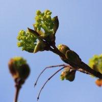 Весна идёт, весне - дорогу :: Михаил Лесин