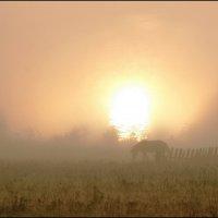 призрак в тумане... :: ЮРИЙ ТВЕРДОХЛЕБОВ