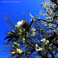 Весна. :: Ольга Милованова
