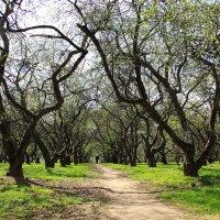 весенний сад :: Анна -