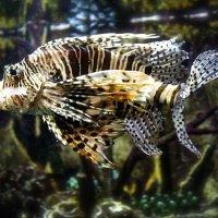 Рыба :: Виктория