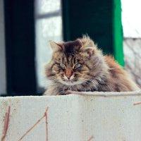 Кошечка) :: Анна Кокорева