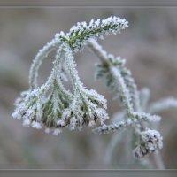 морозное утро :: Мария Исаева