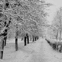 Город накрыло первым снегом :: Кристина Кеннетт