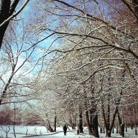 Утро в парке :: Кристина Кеннетт