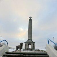 Пудель и Памятник... :: Владимир Павлов