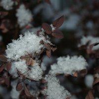 снежинки. :: ольга березовская