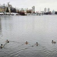 Утки в озере купались... :: Сергей Журов
