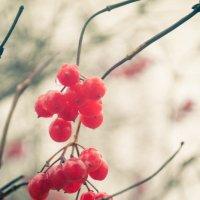 Осень :: Денис Мартынов