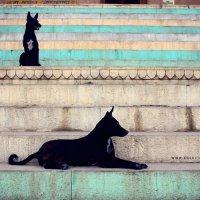 Собаки на гхатах. :: Анастасия Кононенко