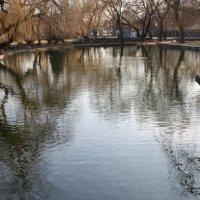 фото Парковый водоём :: Олег Д