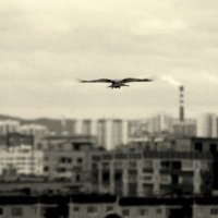 freedom :: Nikita Sychev