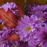 просто понравились цветы :: Ольга Рыбакова