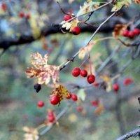 autumn :: Anastasia GangLiON