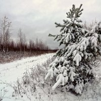 Первый снег в октябре :: Аркадий Шапошников