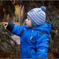 Елочка, елка лесной аромат... :: Наталья Долженко