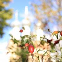 Шиповник осенью... :: Елизавета Ханаева