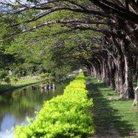 Национльный парк, Ланкави :: Алекс Беc