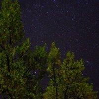 Звездное небо над Горынью :: Виктория Шалик