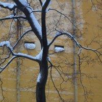 дерево-зима :: Ната Иванова