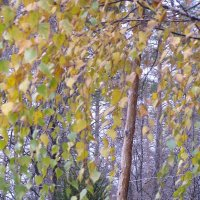 Уж небо осенью дышало...Зима в окошко постучала :: Елена Кузнецова