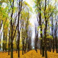 Золотой ковер. :: Aleksandr Alexx