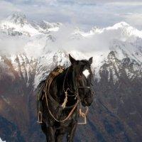 маленькая, но гордая лошадка :: Анастасия Амельченко