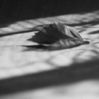 Живое/неживое; черное/белое :: Анастасия Аксенова