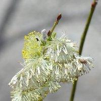 Весна :: ирм. Феодосий Олег Раздобреев