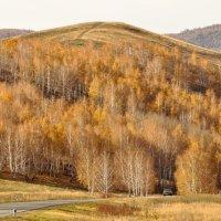 Может  быть, заносит Доля удалая ? Ах, моя ты осень, Осень золотая ! © :: Maxxx©