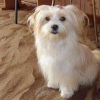 Моя собака :: Юлия Сметанина