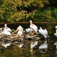 Птичий базар... :: Anatoley Lunov