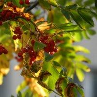 Осень за окном :: Владимир Лагажан