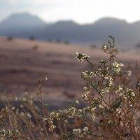 в пустыне :: Lisa Buzova