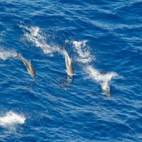 Dolphins :: Станислав Хохолков