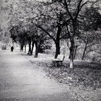 Голые парки :: Maria Murachova