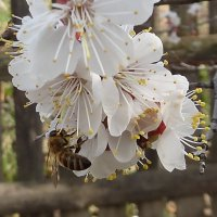 Пчёлка :: ирм. Феодосий Олег Раздобреев